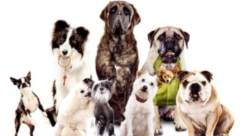 Evdeki Dostlarımız İçin Akıllı Evcil Hayvan Eşyaları