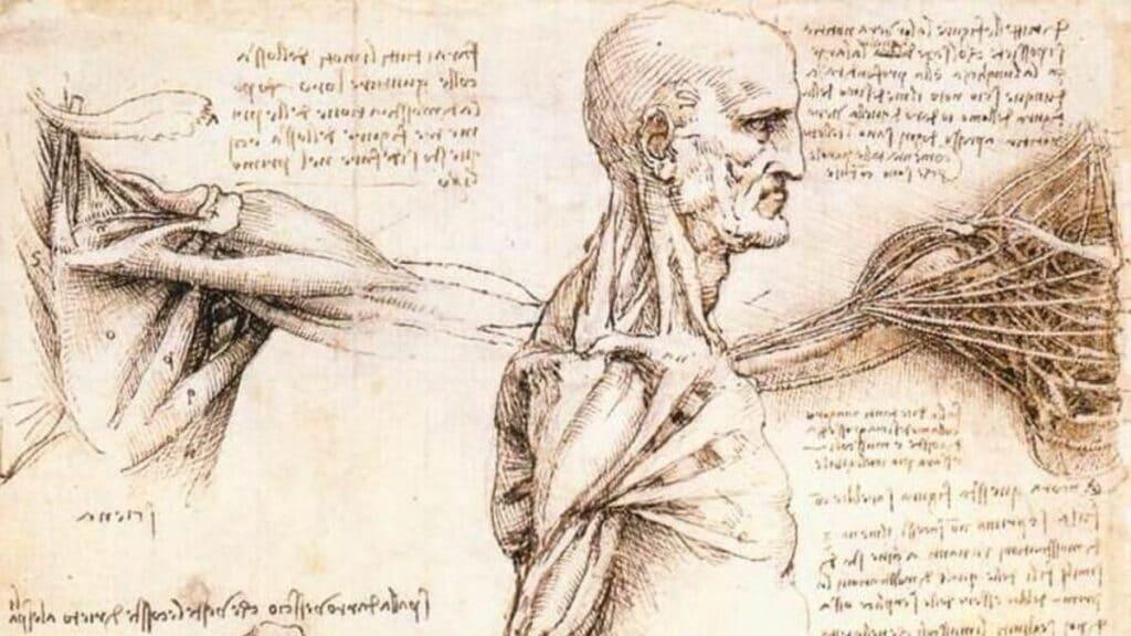 Leonardo Da Vinci'nin Buluşları anatomi