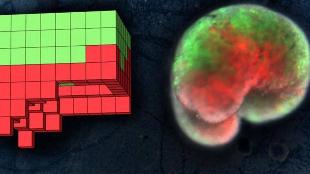 bilgisayarda-ksenobot-hücre-tasarımı