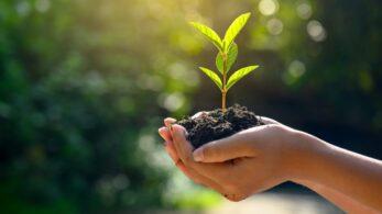 Doğa Dostları İçin 8 Çevreci Uygulama