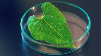 Yapay Fotosentez: Geleceğin Yenilenebilir Enerjisi