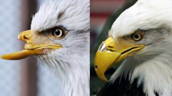 Hayvanlar için 3D Baskı Hayat Kurtarıcı