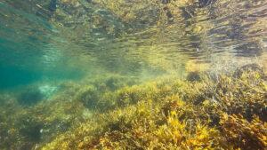 Okyanustan Sıfır Karbonlu Bir Gelecek Yaratmak