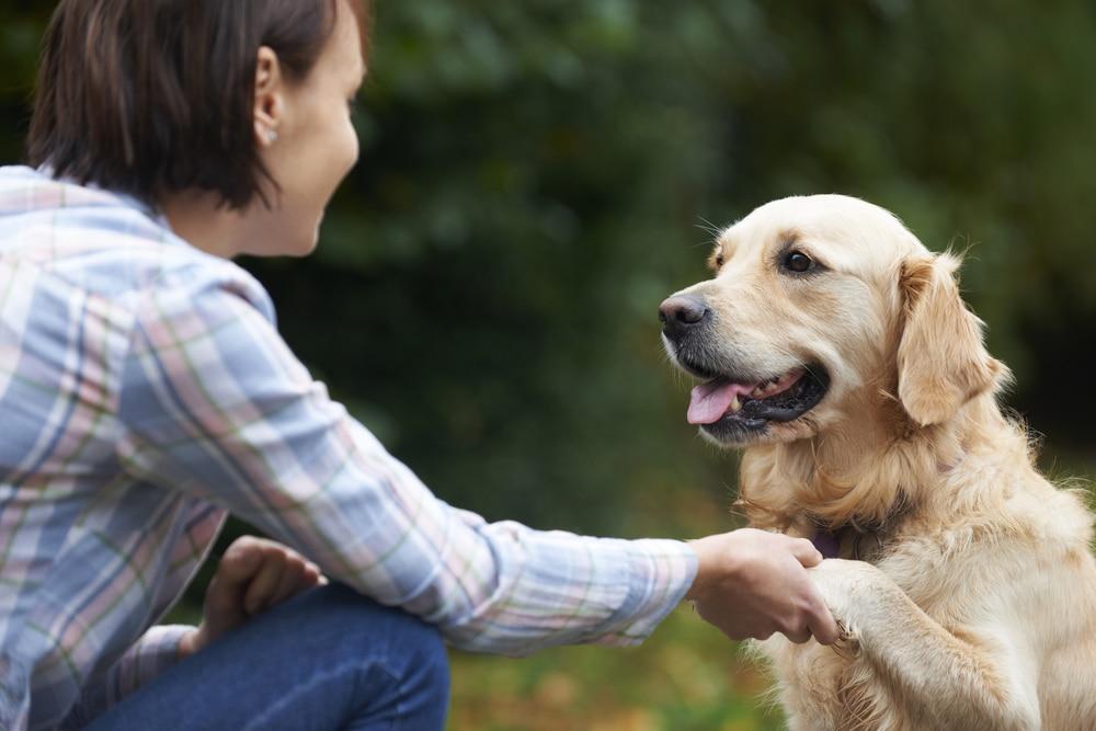 Hayvanlara İletişim Kurmak