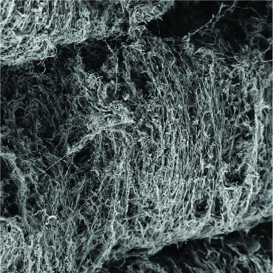 bakterilerdeki lifler