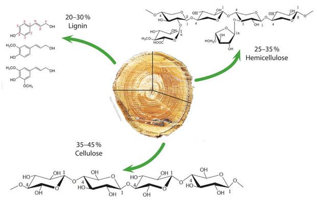 Odun parçasında bulunan selüloz ve lignin oranları