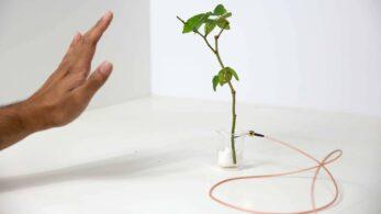 Cyborg Bitkiler ile Biyo-Dijital Bir Çağ