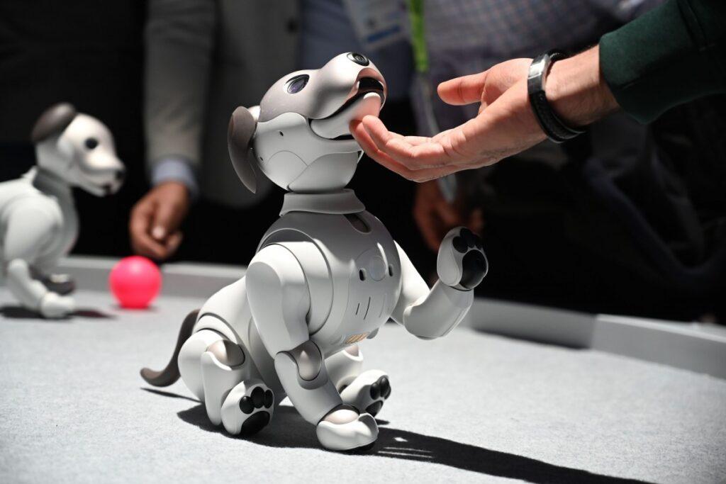 Sosyal Robotlar Risk mi?