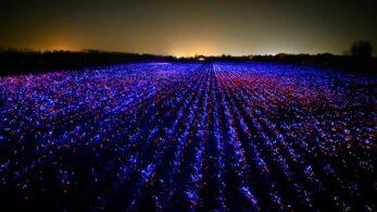 GROW: Teknoloji ve Tarımın Birleştiği Proje