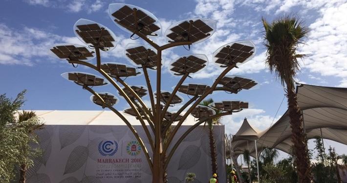 Fas'ta üretilmiş güneş ağaçları.