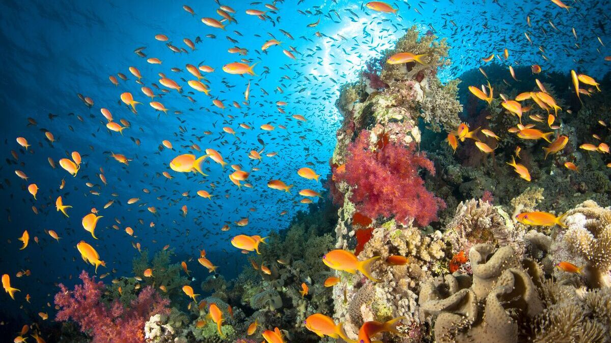 Okyanus Keşiflerinde Teknoloji