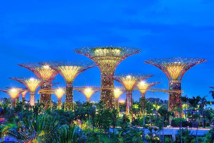 Singapur'daki güneş ağaçları.