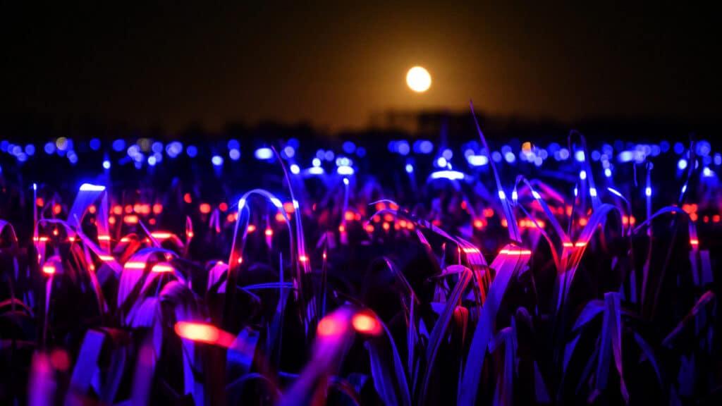 Dans Eden Işıklar