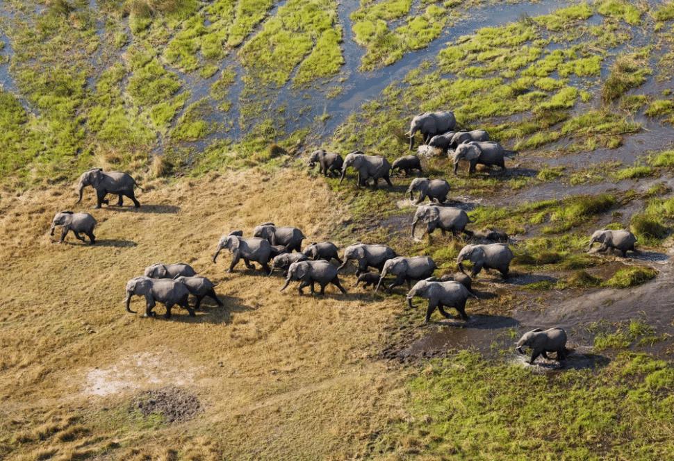göç eden afrika filleri